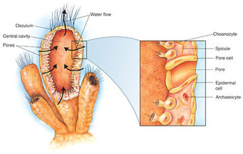 Healthy Diet For Leaky Gut Syndrome Does Digestive Porifera Tract